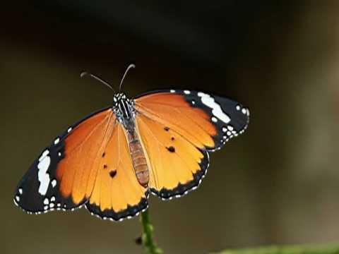 Ramsgate Butterfly Valley